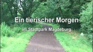 Wildschweine in Magdeburg