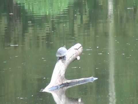 Schildkröte auf Baum