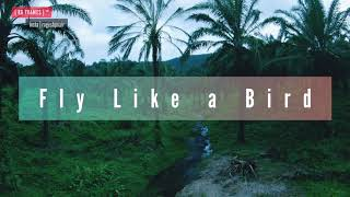 Fly Like a Bird Ft Athirappilly KERALA   Kerala FPV Freestyle