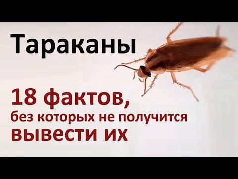 18 фактов о тараканах, которые нужно знать для их истребления