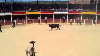 preview picture of video 'ENCIERRO EN ANCHUELO 2-5-2014'