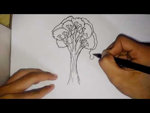 Tips tes psikologi tes gambar pohon, psikotes || Psychological test tips test tree images