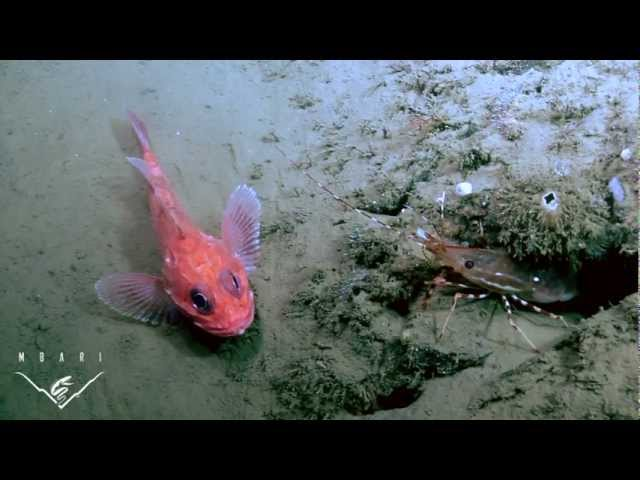 Life on the edge: Is ocean acidification a threat to deep-sea life?