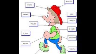 Partes del cuerpo para niños. Aprender a hablar