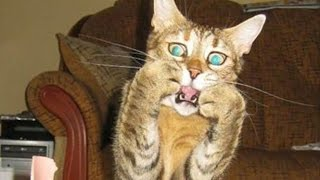 Смешные кошки и собаки | Подборка приколов про животных