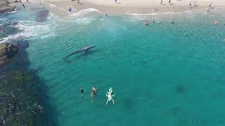 Whale visits beachgoers in Laguna Beach