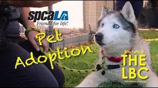 You, Me, & the LBC | Pet Adoption at El Dorado