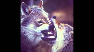 Танцы с волками )))