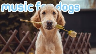 11 HOURS OF RELAX MY DOG MUSIC! Songs to Chill Your Dog! NEW 2019!