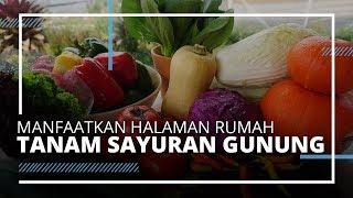VIDEO TRAVEL | Memanfaatkan Halaman Rumah KWT Belitung Budidayakan Sayuran Gunung