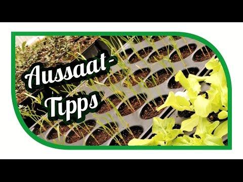 Aussaat & Gartentipps im April 🌱 Jungpflanzenanzucht 🥦 Gemüse erfolgreich anbauen