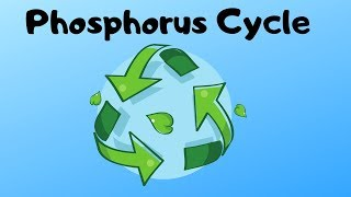 Phosphorus Cycle Steps