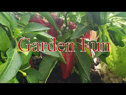 Fall Garden Update & Pig Baby Fun With  Linda's Pantry