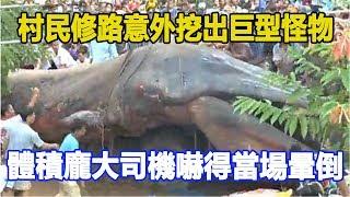 村民修路意外挖出巨型怪物,體積龐大司機嚇得當場暈倒