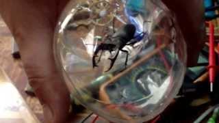 Кто знает точное название этого жука?