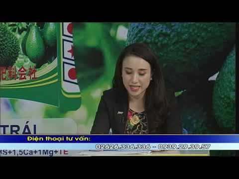 JVF NPK for Avocado and Durian in Vietnam (Part 1/3)