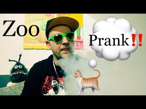 #Telefonprank‼️ In Zoohandlung nach Copy Cat /Fantasi Kratzmatte und Tigerwire gefragt !!!