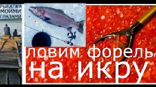 Ловля окуня на красную икру