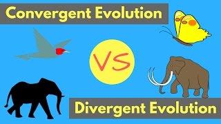 Convergent Evolution vs Divergent Evolution | Shared Traits Explained