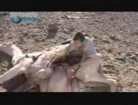 Reality TV's Grossest Moments: Dead Cats, Donkey Semen ...