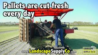 Cutting Sod in Kissimmee for Landscape Supply Orlando! Fresh grass cut daily