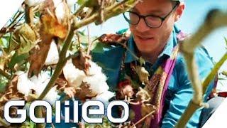 T-Shirts, Jeans & Co: So hart ist Baumwollernte für unsere Klamotten! | Galileo | ProSieben