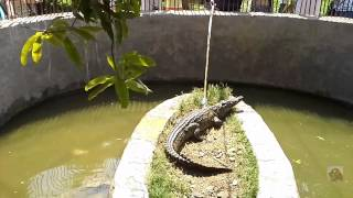 Крокодильчик из Египта