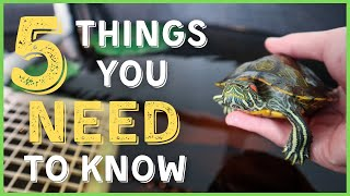 5 Things You NEED to Know Before Buying a RED-EARED SLIDER Turtle