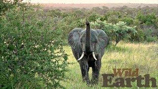 WildEarth - Sunset Safari - 2 April 2020 - Part 1