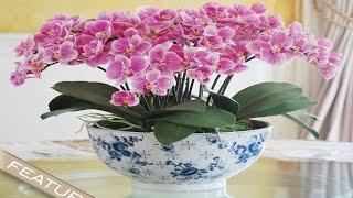Забавный способ украсить дом Орхидеями