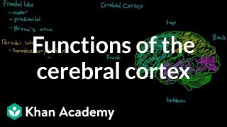 Overview of the functions of the cerebral cortex