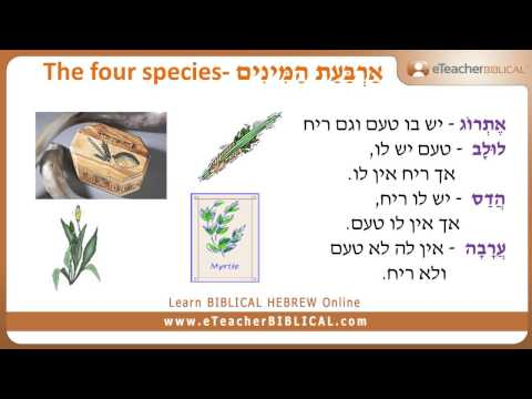 Questions Of The Week | Learn Biblical Hebrew & Greek with eTeacher
