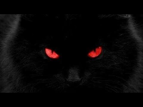 Análise | O Gato Preto | JULGANDO o narrador | Edgar Allan Poe | Real x Ficcional