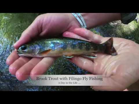 The Day of the Brook Trout