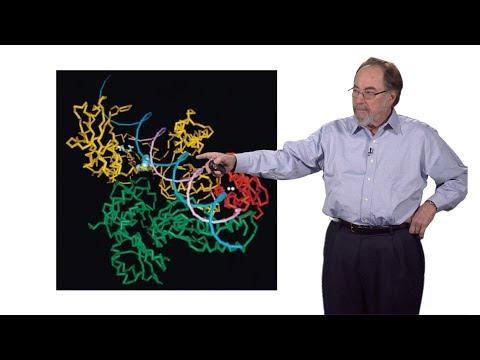 Virus del papiloma tipo 6