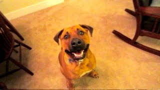 FUNNY JOKES TO CHEER UP DOG - Life After College Vlog: Ep. 149