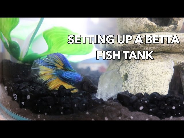 HOW TO: SET UP A BETTA FISH TANK