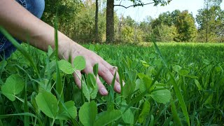 How To Create The PERFECT Food Plot