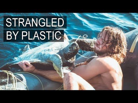 Saving Sea Turtles in the Pacific Ocean