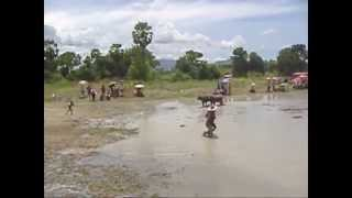 preview picture of video 'Water Buffalo Racing Accident'