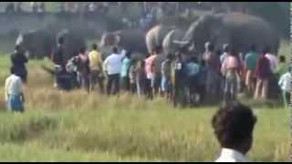 Смотреть онлайн Шок: бешеный слон калечит людей