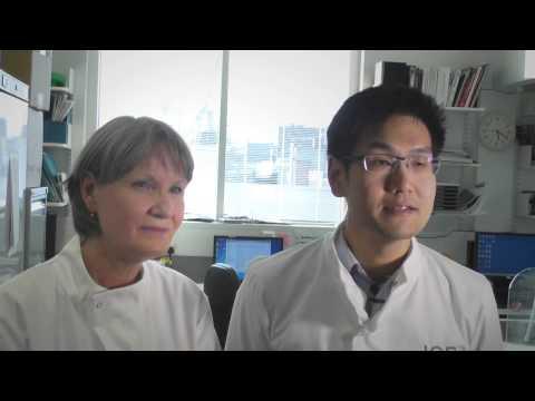 Papilloma virus trattamento uomo