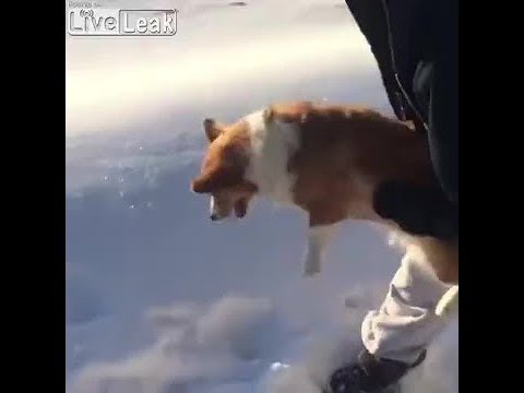 Dog Thrown Out Of Airplane