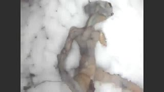 Is This A Dead Alien ?