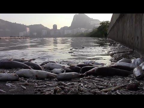 العرب اليوم - شاهد: نفوق 13 طنًا من الأسماك في البرازيل بسبب ظاهرة
