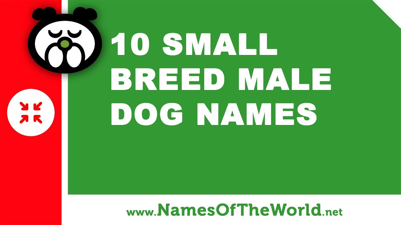 10 small breed male dog names - the best pet names - www.namesoftheworld.net