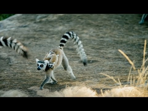 Island of Lemurs: Madagascar TV Spot 1