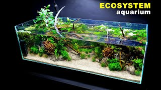 HOW TO: ECOSYSTEM AQUARIUM, NO WATER CHANGES   Full Step By Step Tutorial   MD FISH TANKS