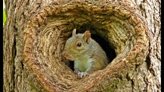 Squirrels for Cats and Dogs to Watch in 4K