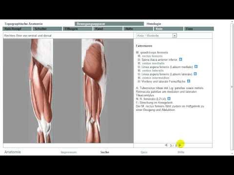 Die Abteilungen der vaskulösen Chirurgie in samare